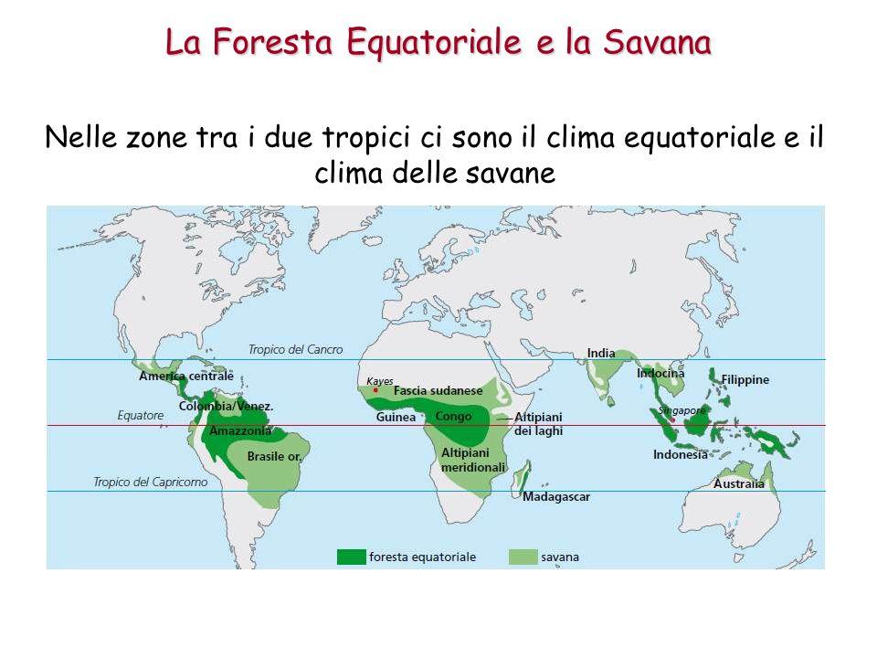 Nelle zone tra i due tropici ci sono il clima equatoriale e il clima delle savane