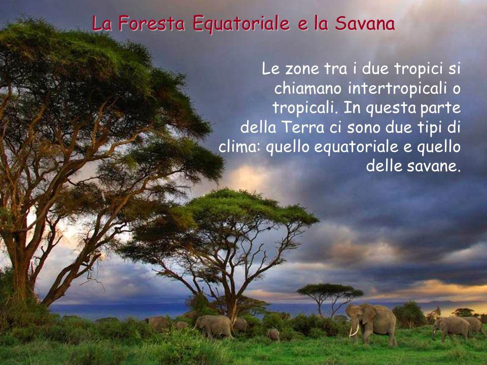 Il clima equatoriale è nella zona vicina allEquatore; vicino ai tropici ci sono le savane.
