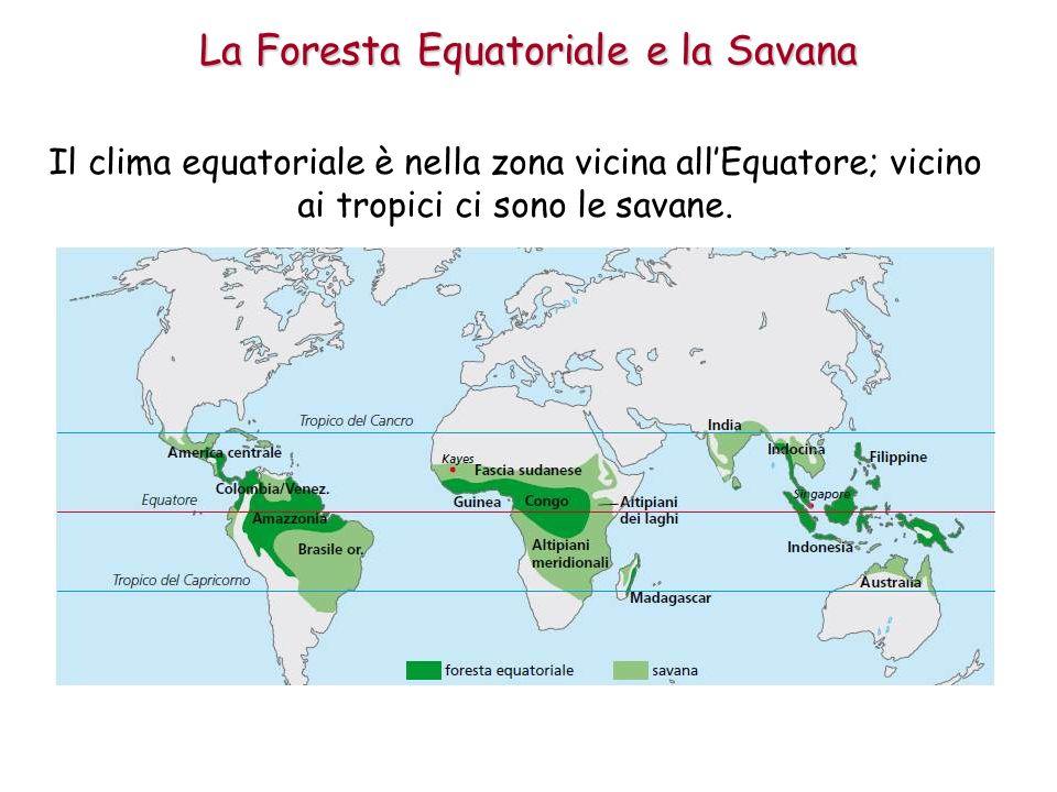 Nella zona equatoriale fa caldo per tutto lanno e piove quasi sempre; qui cresce la foresta equatoriale, che si chiama anche pluviale (perché piove molto).