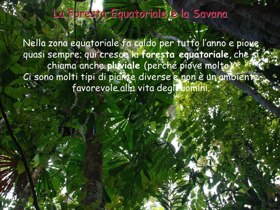 Nella zona equatoriale fa caldo per tutto lanno e piove quasi sempre; qui cresce la foresta equatoriale, che si chiama anche pluviale (perché piove mo