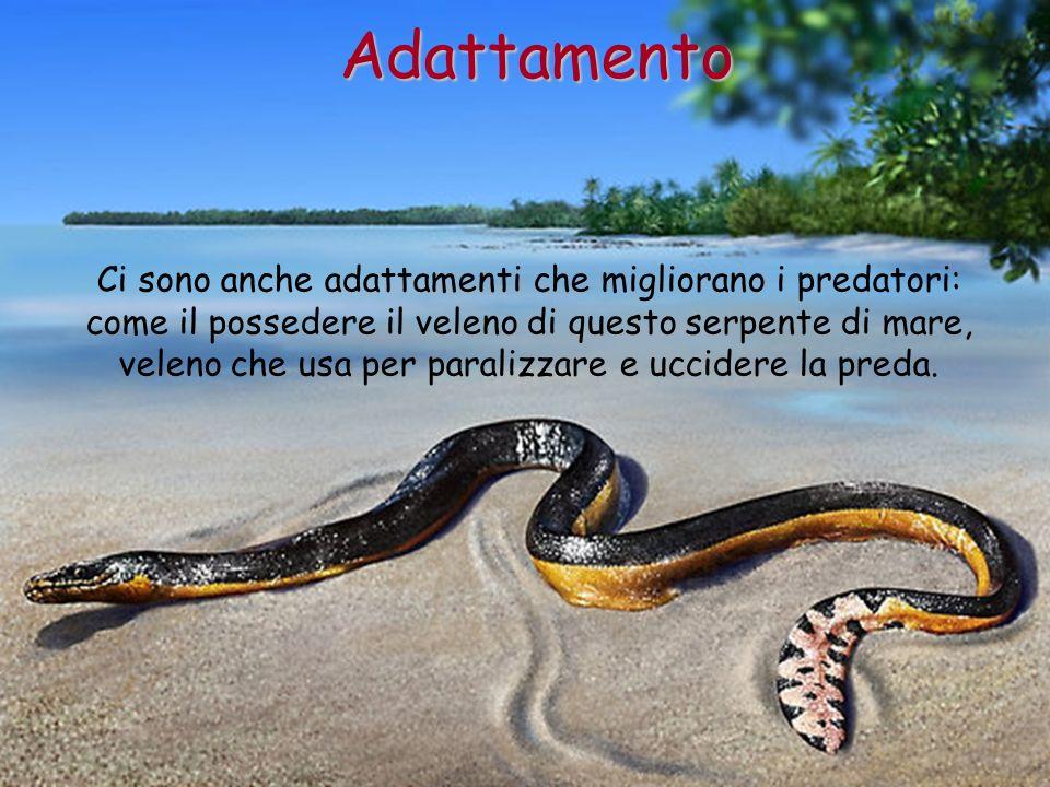 Ci sono anche adattamenti che migliorano i predatori: come il possedere il veleno di questo serpente di mare, veleno che usa per paralizzare e uccider
