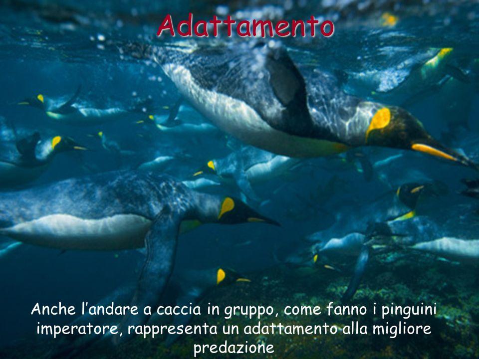 Anche landare a caccia in gruppo, come fanno i pinguini imperatore, rappresenta un adattamento alla migliore predazione Adattamento