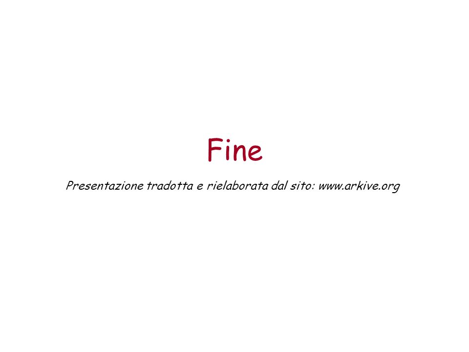 Fine Presentazione tradotta e rielaborata dal sito: www.arkive.org
