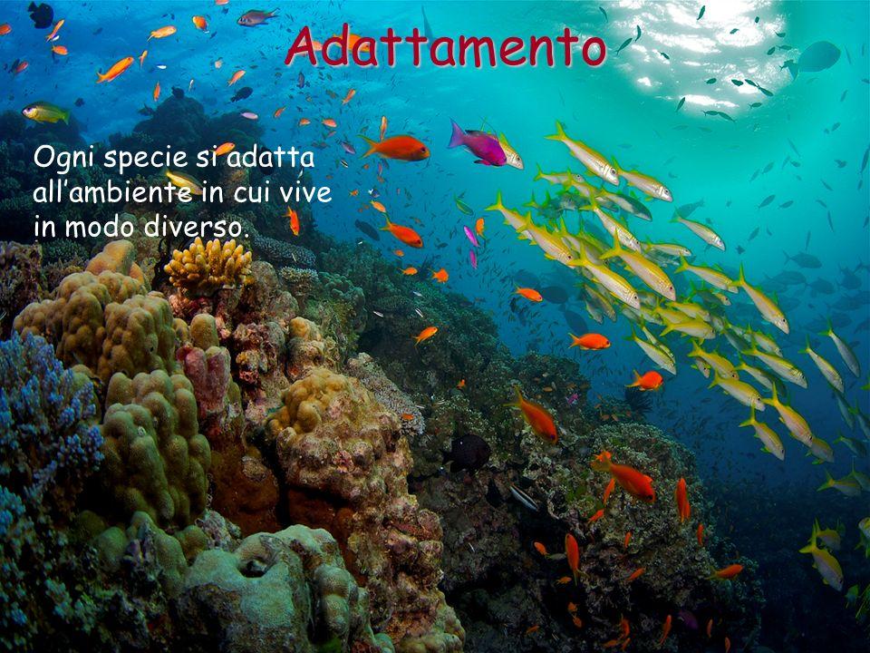 Ogni specie si adatta allambiente in cui vive in modo diverso. Adattamento
