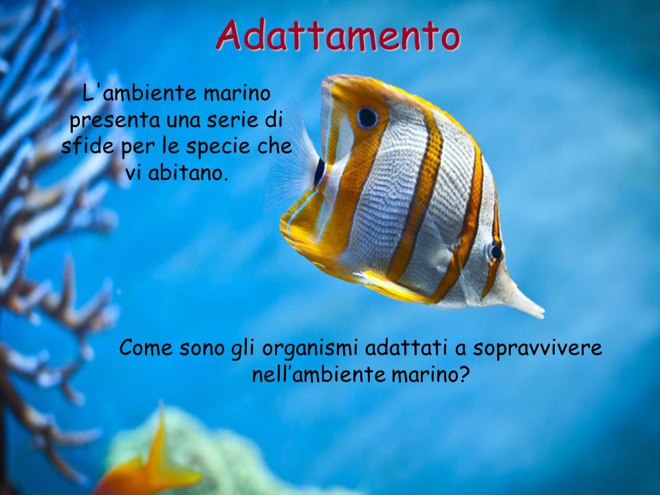 Come sono gli organismi adattati a sopravvivere nellambiente marino? Adattamento L'ambiente marino presenta una serie di sfide per le specie che vi ab
