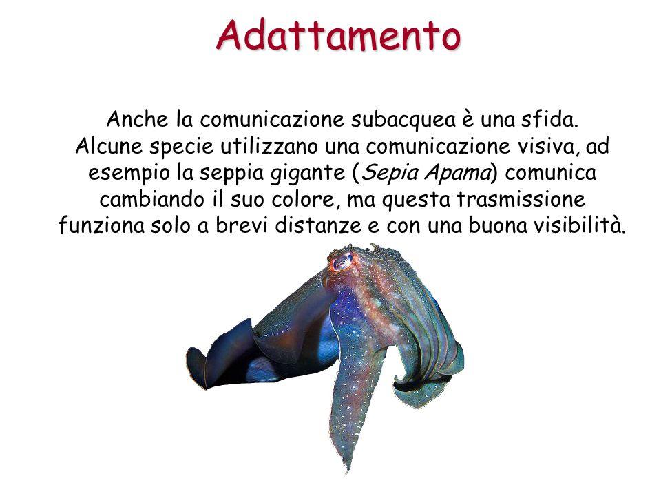 Anche la comunicazione subacquea è una sfida. Alcune specie utilizzano una comunicazione visiva, ad esempio la seppia gigante (Sepia Apama) comunica c