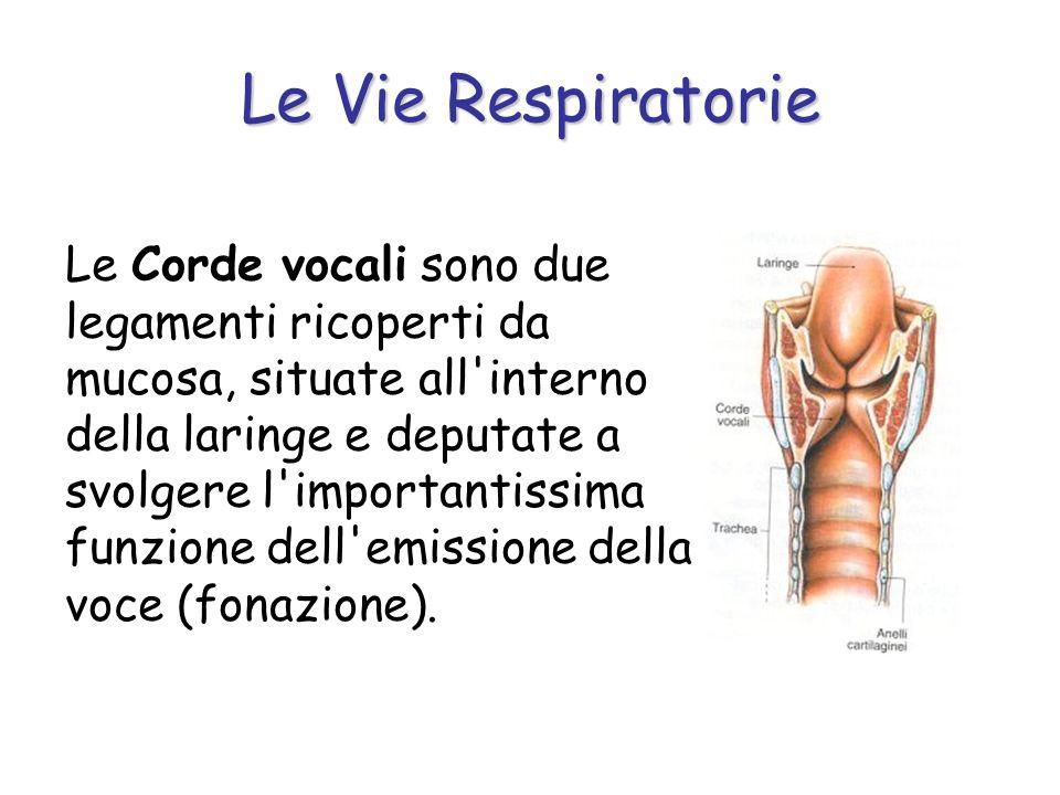 Le Vie Respiratorie Le Corde vocali sono due legamenti ricoperti da mucosa, situate all'interno della laringe e deputate a svolgere l'importantissima