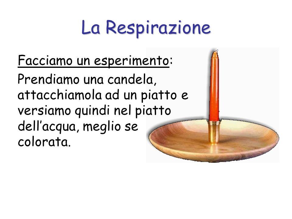 La Respirazione Facciamo un esperimento: Prendiamo una candela, attacchiamola ad un piatto e versiamo quindi nel piatto dellacqua, meglio se colorata.