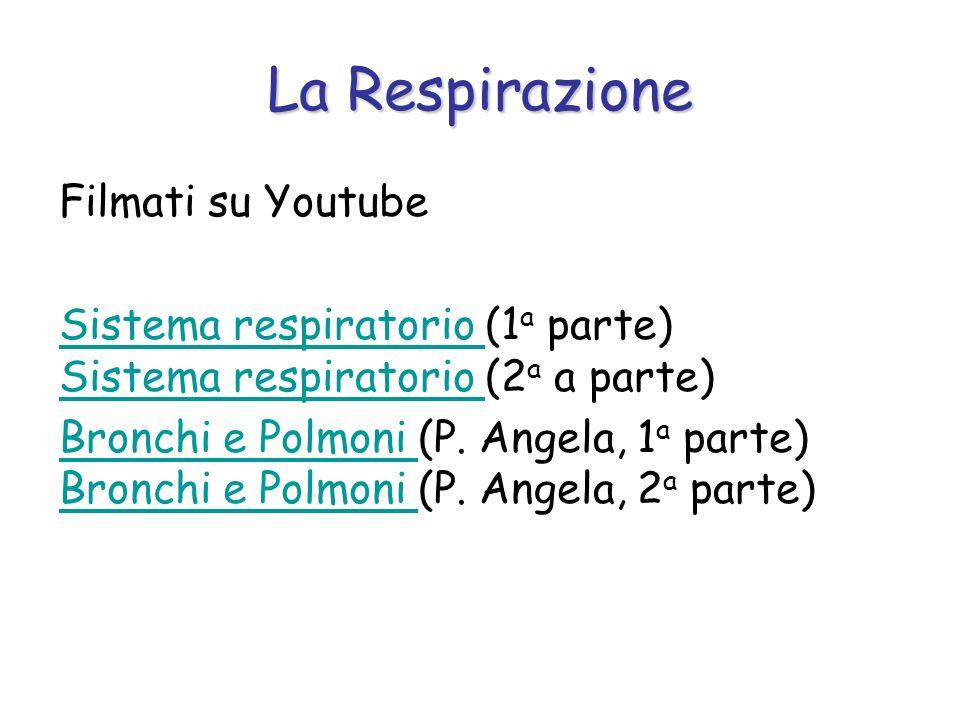 Filmati su Youtube Sistema respiratorio Sistema respiratorio (1 a parte) Sistema respiratorio (2 a a parte) Sistema respiratorio Bronchi e Polmoni Bro