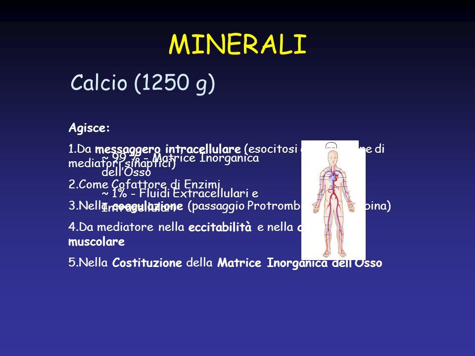 Fosforo (650 g) Agisce: 1.Nella Costituzione della Matrice Inorganica dellOsso 2.Nella Sintesi di: »Fosfolipidi di membrana »Acidi Nucleici »Prodotti Intermedi del Metabolismo Carboidrati MINERALI ~ 85 % - Matrice Inorganica dellOsso ~ 15% - Fluidi Extracellulari e Intracellulari