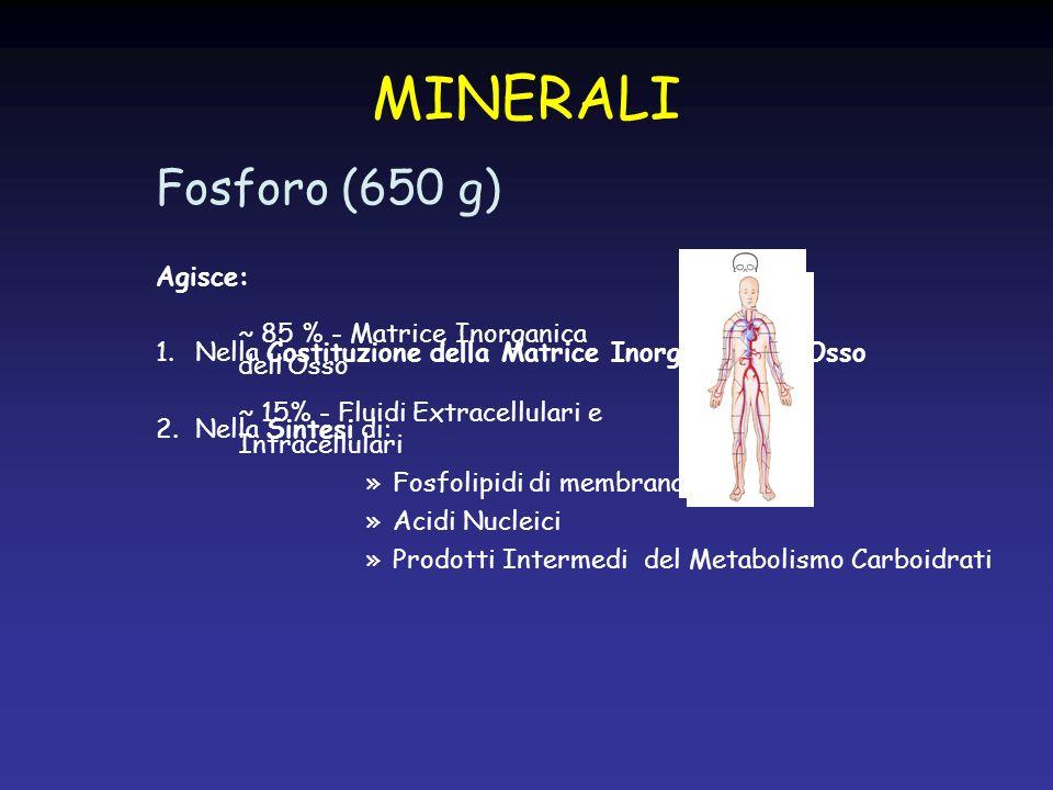 Fosforo (650 g) Agisce: 1.Nella Costituzione della Matrice Inorganica dellOsso 2.Nella Sintesi di: »Fosfolipidi di membrana »Acidi Nucleici »Prodotti