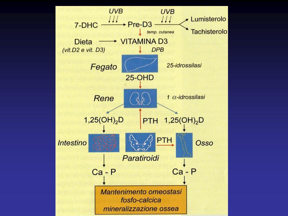TERAPIA DEL RACHITISMO VITAMINA D Si attua somministrando vit.D e non i suoi metaboliti attivi La vit.