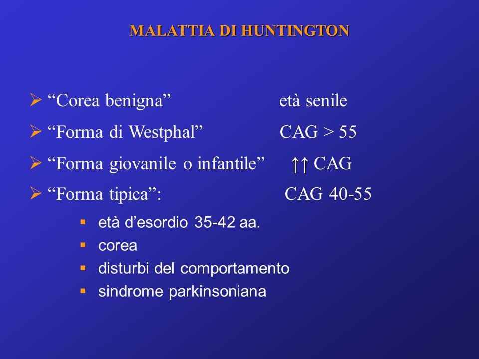 Corea benigna età senile Forma di Westphal CAG > 55 Forma giovanile o infantile CAG Forma tipica: CAG 40-55 MALATTIA DI HUNTINGTON età desordio 35-42