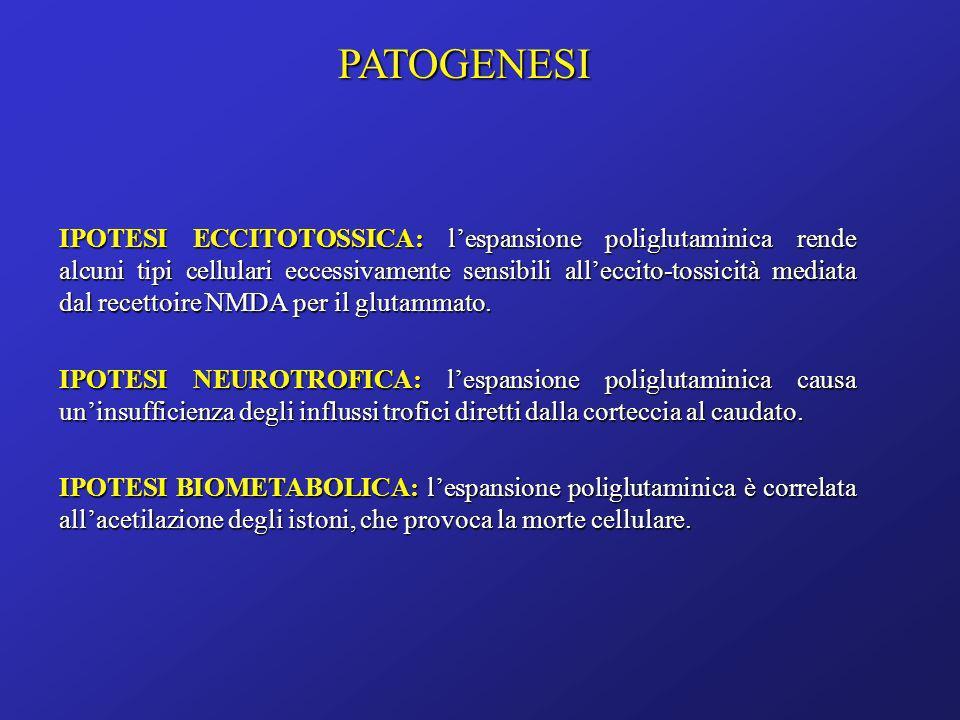 IPOTESI ECCITOTOSSICA: lespansione poliglutaminica rende alcuni tipi cellulari eccessivamente sensibili alleccito-tossicità mediata dal recettoire NMD