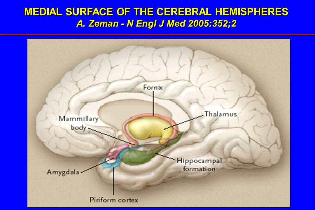 MEDIAL SURFACE OF THE CEREBRAL HEMISPHERES A. Zeman - N Engl J Med 2005:352;2 MEDIAL SURFACE OF THE CEREBRAL HEMISPHERES A. Zeman - N Engl J Med 2005: