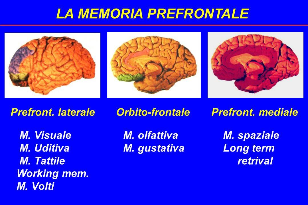 LA MEMORIA PREFRONTALE Prefront. laterale Orbito-frontale Prefront. mediale M. Visuale M. olfattiva M. spaziale M. Uditiva M. gustativa Long term M. T