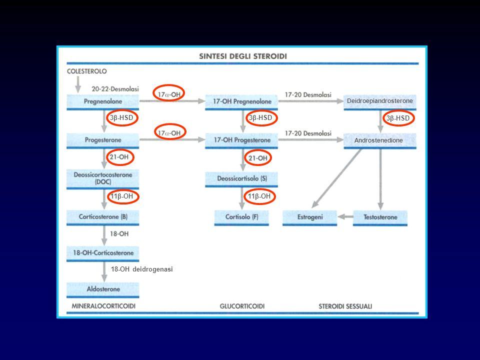 DIFETTI ENZIMATICI RESPONSABILI DI SAG Deficit di 21- idrossilasi 90-95% Deficit di 11β - idrossilasi Deficit di 17α - idrossilasi Deficit di 3β - ol deidrogenasi Prevalenza SAG : 1:10.000 – 1:20.000