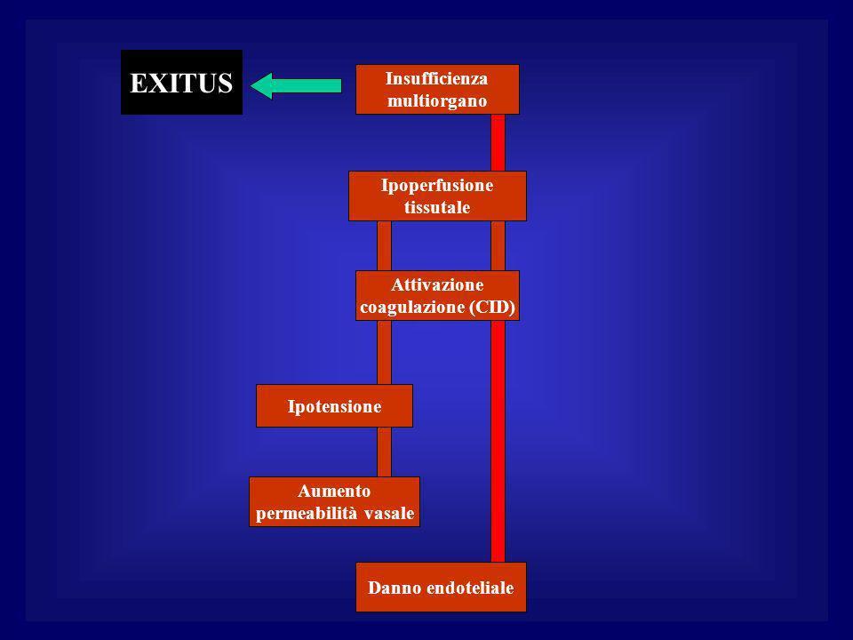 Danno endoteliale Aumento permeabilità vasale Ipotensione Attivazione coagulazione (CID) Ipoperfusione tissutale Insufficienza multiorgano EXITUS