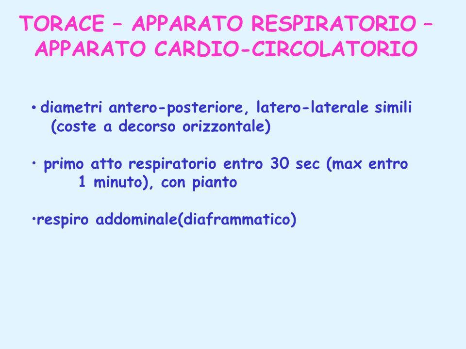 TORACE – APPARATO RESPIRATORIO – APPARATO CARDIO-CIRCOLATORIO diametri antero-posteriore, latero-laterale simili (coste a decorso orizzontale) primo a