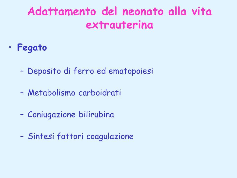 Adattamento del neonato alla vita extrauterina Fegato –Deposito di ferro ed ematopoiesi –Metabolismo carboidrati –Coniugazione bilirubina –Sintesi fat