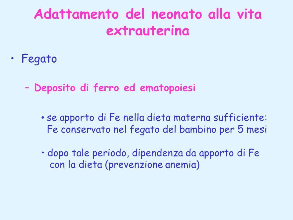 Adattamento del neonato alla vita extrauterina Fegato –Deposito di ferro ed ematopoiesi se apporto di Fe nella dieta materna sufficiente: Fe conservat