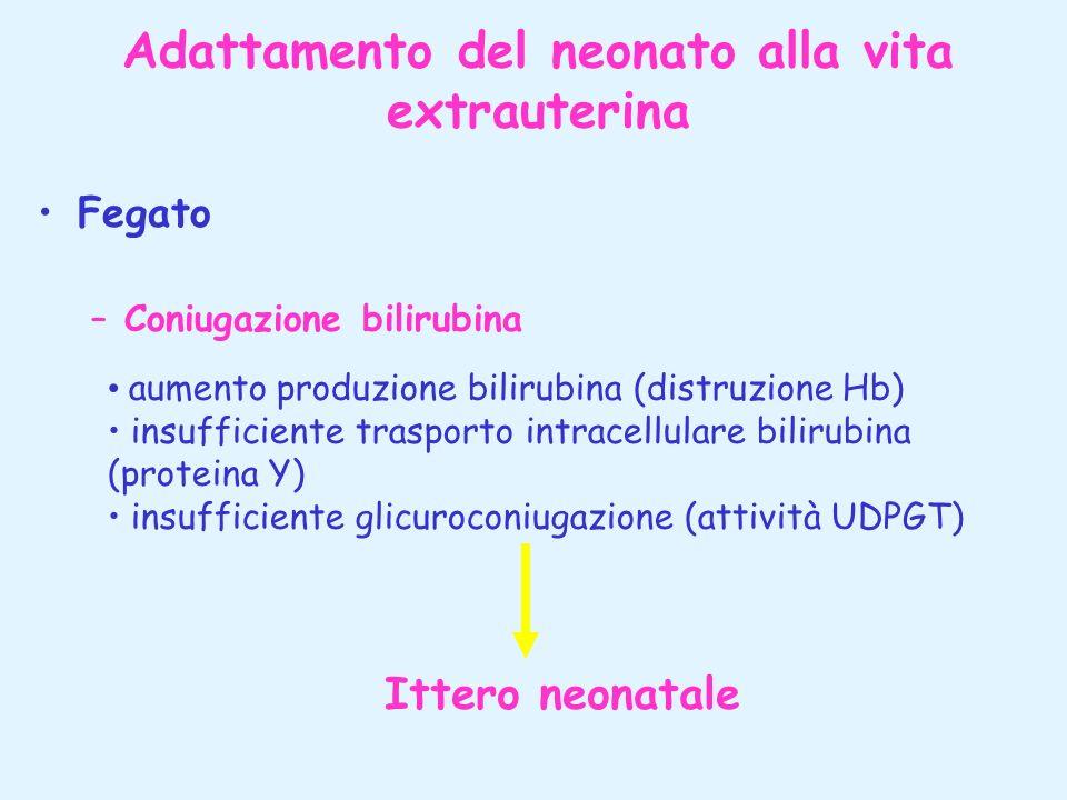 Adattamento del neonato alla vita extrauterina Fegato –Coniugazione bilirubina aumento produzione bilirubina (distruzione Hb) insufficiente trasporto