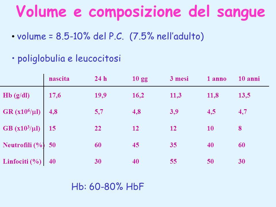 Volume e composizione del sangue volume = 8.5-10% del P.C. (7.5% nelladulto) poliglobulia e leucocitosi nascita24 h10 gg3 mesi1 anno10 anni Hb (g/dl)1