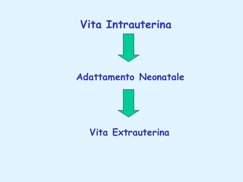 Vita Intrauterina Adattamento Neonatale Vita Extrauterina