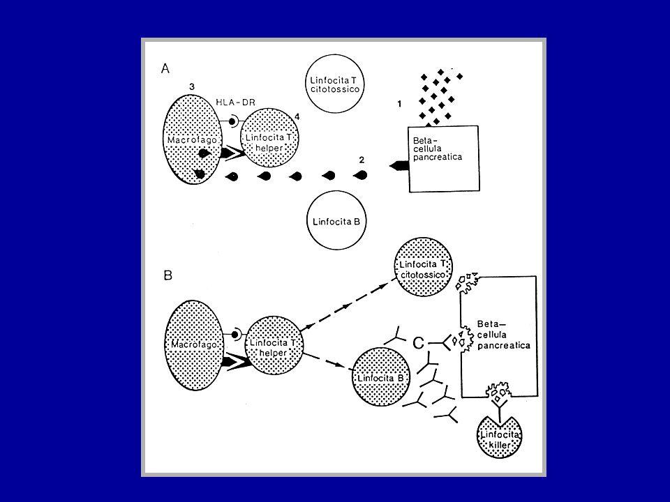 FATTORI AMBIENTALI Infezioni virali - coxsackie B1-B6 - virus della rosolia - cytomegalovirus - virus della parotite Dati a favore del ruolo delle infezioni virali - dati anamnestici - stagionalità - isolamento del virus coxsackie B4 dal pancreas di un paziente - presenza di IFN-α nelle β cellule di pancreas di diabetici