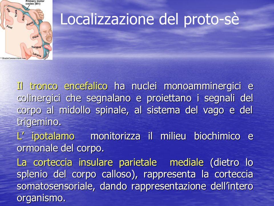 Il tronco encefalico ha nuclei monoamminergici e colinergici che segnalano e proiettano i segnali del corpo al midollo spinale, al sistema del vago e