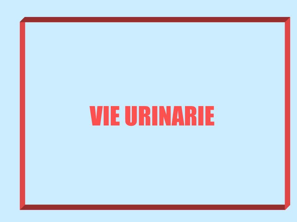 VIE URINARIE