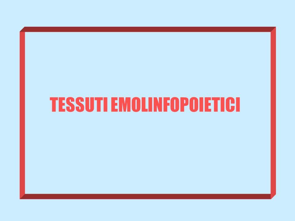 TESSUTI EMOLINFOPOIETICI