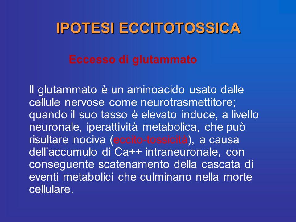 IPOTESI ECCITOTOSSICA Eccesso di glutammato Il glutammato è un aminoacido usato dalle cellule nervose come neurotrasmettitore; quando il suo tasso è e