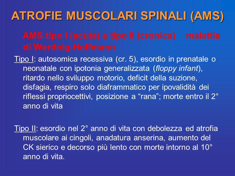 ATROFIE MUSCOLARI SPINALI (AMS) AMS tipo I (acuta) e tipo II (cronica) malattia di Werdnig-Hoffmann Tipo I: autosomica recessiva (cr. 5), esordio in p