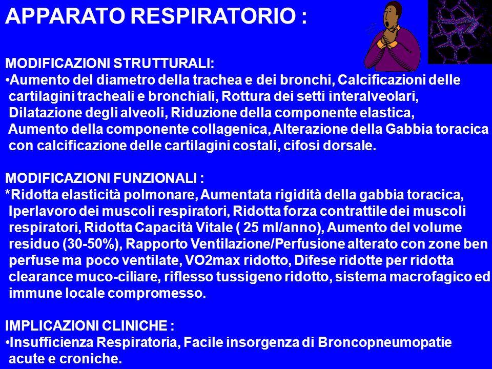 APPARATO RESPIRATORIO : MODIFICAZIONI STRUTTURALI: Aumento del diametro della trachea e dei bronchi, Calcificazioni delle cartilagini tracheali e bron