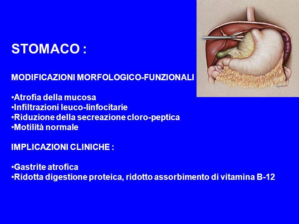 STOMACO : MODIFICAZIONI MORFOLOGICO-FUNZIONALI : Atrofia della mucosa Infiltrazioni leuco-linfocitarie Riduzione della secreazione cloro-peptica Motil