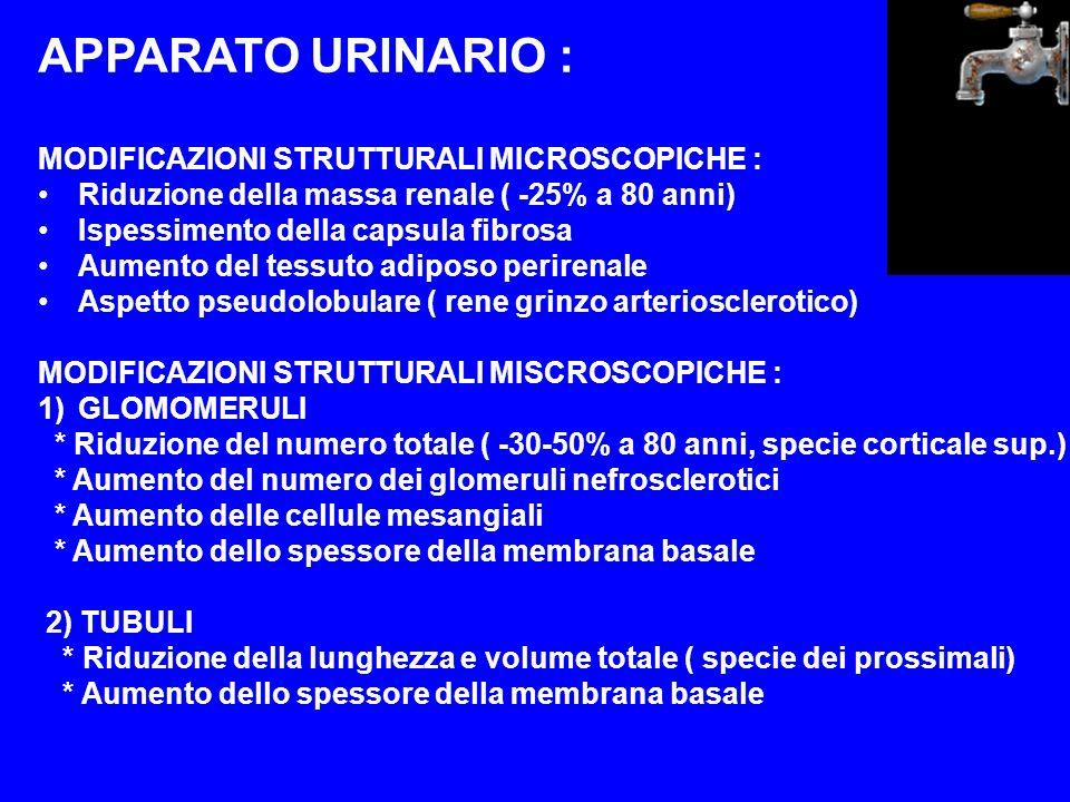 APPARATO URINARIO : MODIFICAZIONI STRUTTURALI MICROSCOPICHE : Riduzione della massa renale ( -25% a 80 anni) Ispessimento della capsula fibrosa Aument