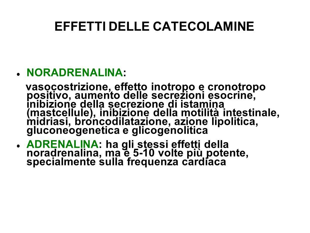 EFFETTI DELLE CATECOLAMINE NORADRENALINA: vasocostrizione, effetto inotropo e cronotropo positivo, aumento delle secrezioni esocrine, inibizione della secrezione di istamina (mastcellule), inibizione della motilità intestinale, midriasi, broncodilatazione, azione lipolitica, gluconeogenetica e glicogenolitica ADRENALINA: ha gli stessi effetti della noradrenalina, ma è 5-10 volte più potente, specialmente sulla frequenza cardiaca