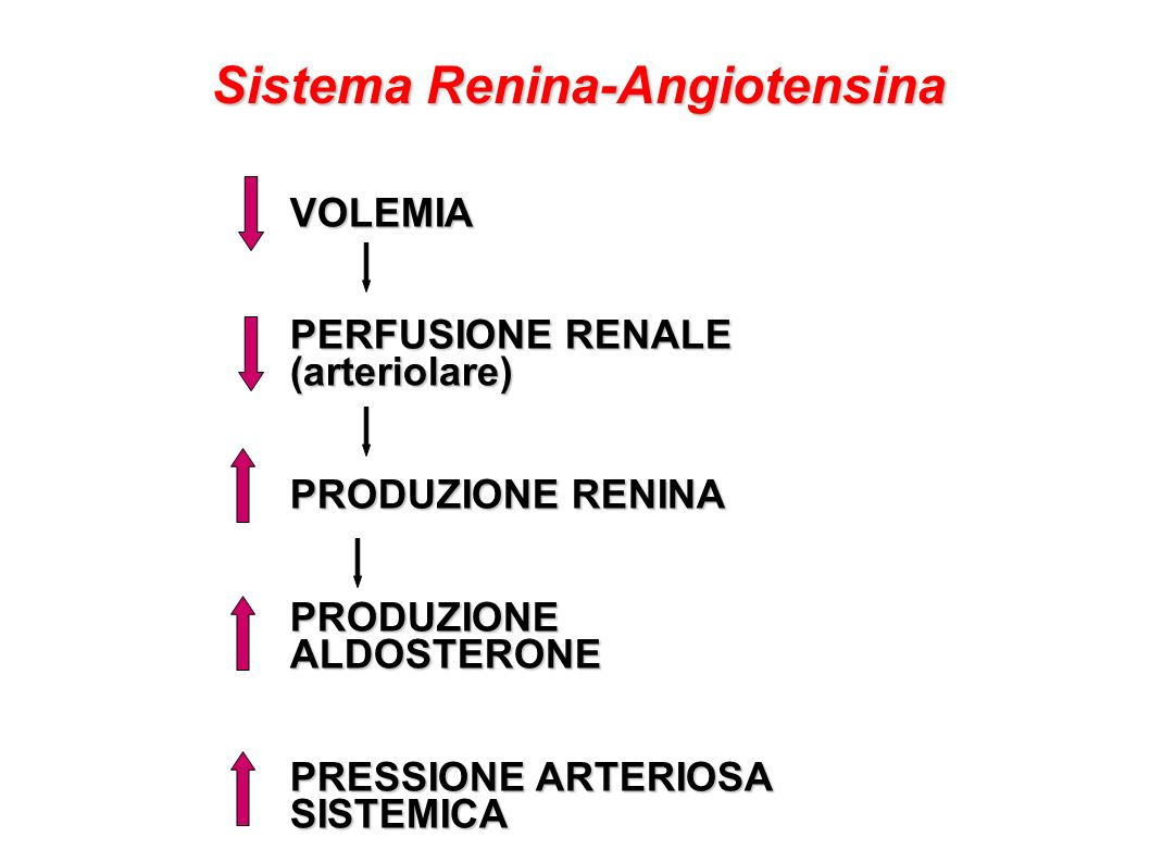 VOLEMIA PERFUSIONE RENALE (arteriolare) PRODUZIONE RENINA PRODUZIONE ALDOSTERONE PRESSIONE ARTERIOSA SISTEMICA Sistema Renina-Angiotensina