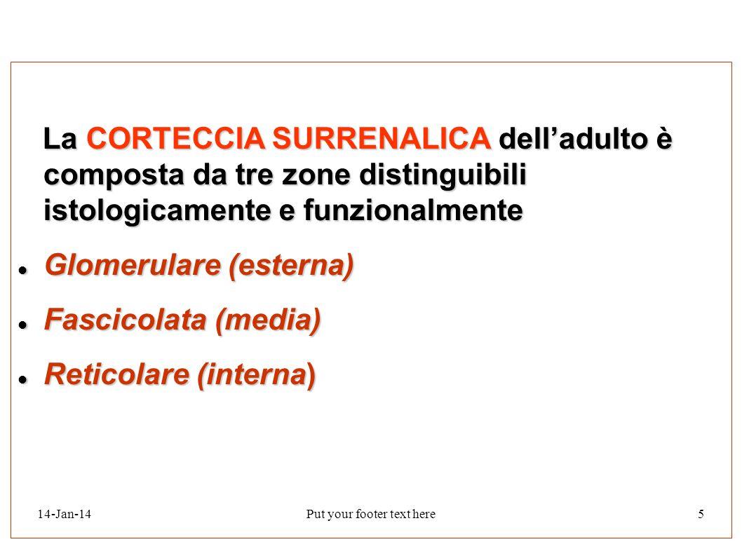 14-Jan-14Put your footer text here5 La CORTECCIA SURRENALICA delladulto è composta da tre zone distinguibili istologicamente e funzionalmente La CORTE