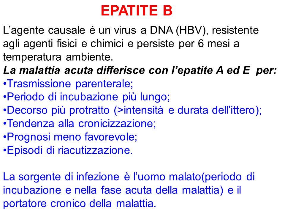 EPATITE B Lagente causale é un virus a DNA (HBV), resistente agli agenti fisici e chimici e persiste per 6 mesi a temperatura ambiente. La malattia ac
