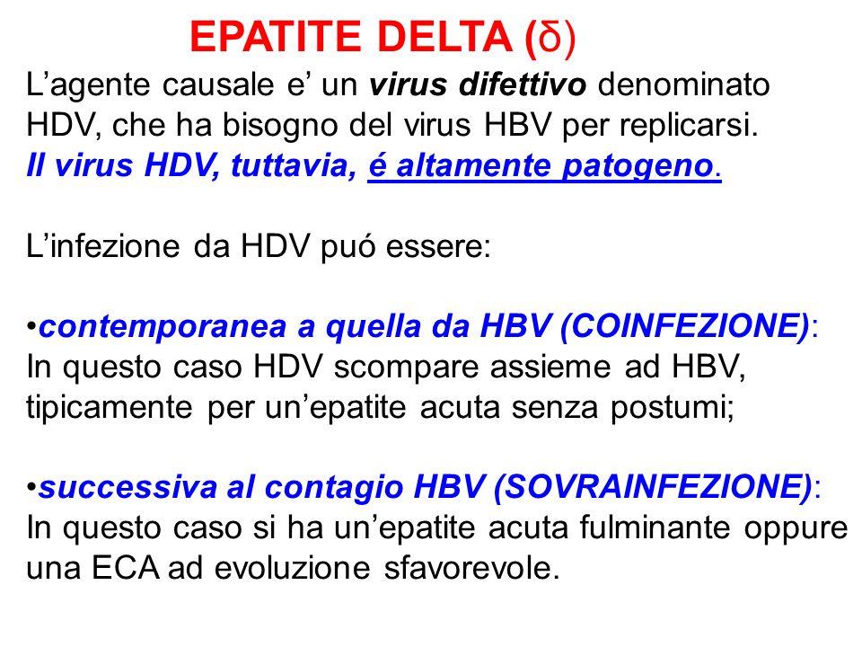 EPATITE DELTA (δ) Lagente causale e un virus difettivo denominato HDV, che ha bisogno del virus HBV per replicarsi. Il virus HDV, tuttavia, é altament