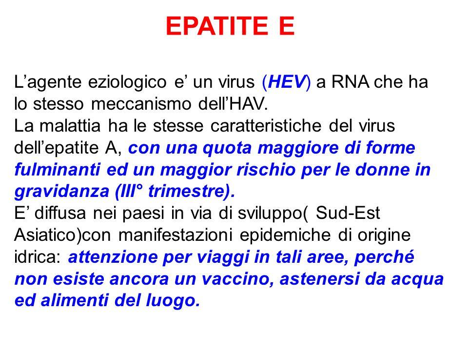 EPATITE E Lagente eziologico e un virus (HEV) a RNA che ha lo stesso meccanismo dellHAV. La malattia ha le stesse caratteristiche del virus dellepatit