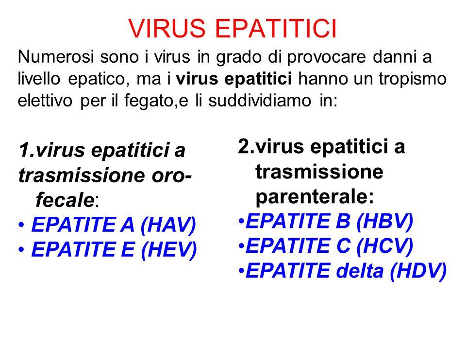 VIRUSDurata di incubazione Epatite AcutaEpatite Cronica HAV Virus Epatite A 10-50 Giorni Non grave, spesso asintomatica NO HBV Virus Epatite B 60-90 Giorni Quasi sempre evidente SI (5-10%dei casi) HCV Virus Epatite C Variabile (2-25sett.) Quasi mai evidente(<10%) Frequente(>7%) Cirrosi(10%) HDV Virus Epatite delta --- Solo insieme ad HBV (Virus difettivo) Come HBV HEV Virus Epatite E 6sett.