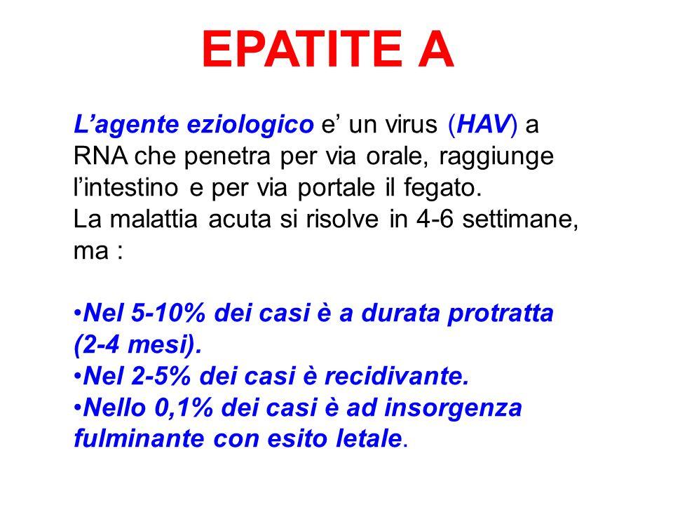 EPATITE A Lagente eziologico e un virus (HAV) a RNA che penetra per via orale, raggiunge lintestino e per via portale il fegato. La malattia acuta si