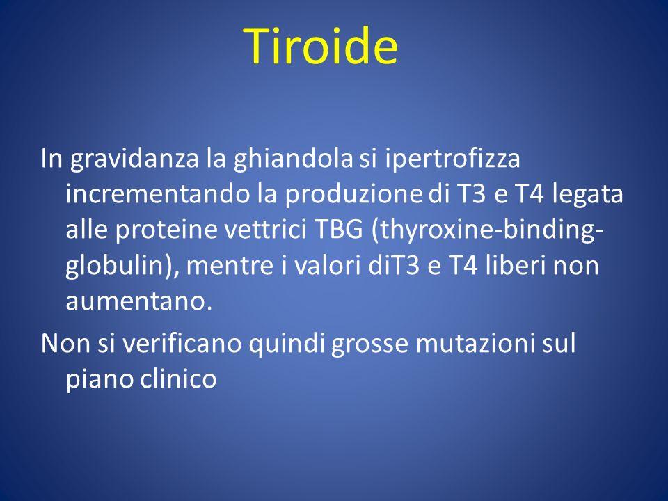 Tiroide In gravidanza la ghiandola si ipertrofizza incrementando la produzione di T3 e T4 legata alle proteine vettrici TBG (thyroxine-binding- globulin), mentre i valori diT3 e T4 liberi non aumentano.