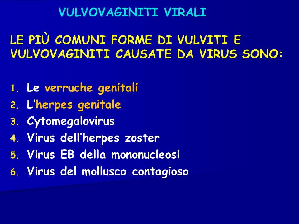VULVOVAGINITI VIRALI LE PIÙ COMUNI FORME DI VULVITI E VULVOVAGINITI CAUSATE DA VIRUS SONO: 1. Le verruche genitali 2. Lherpes genitale 3. Cytomegalovi