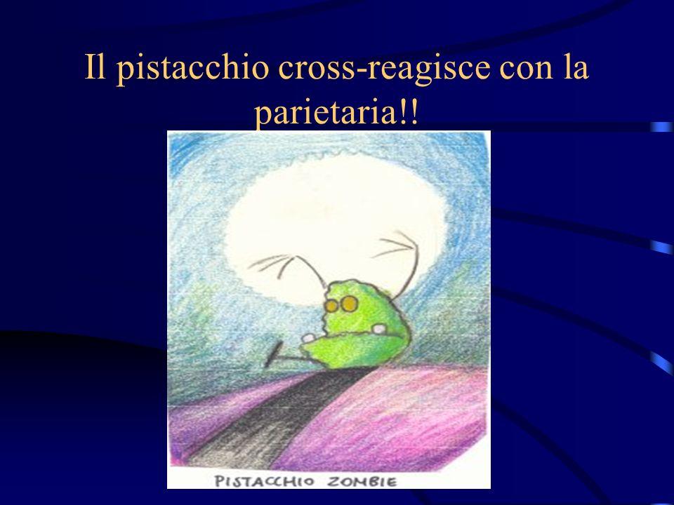 Il pistacchio cross-reagisce con la parietaria!!