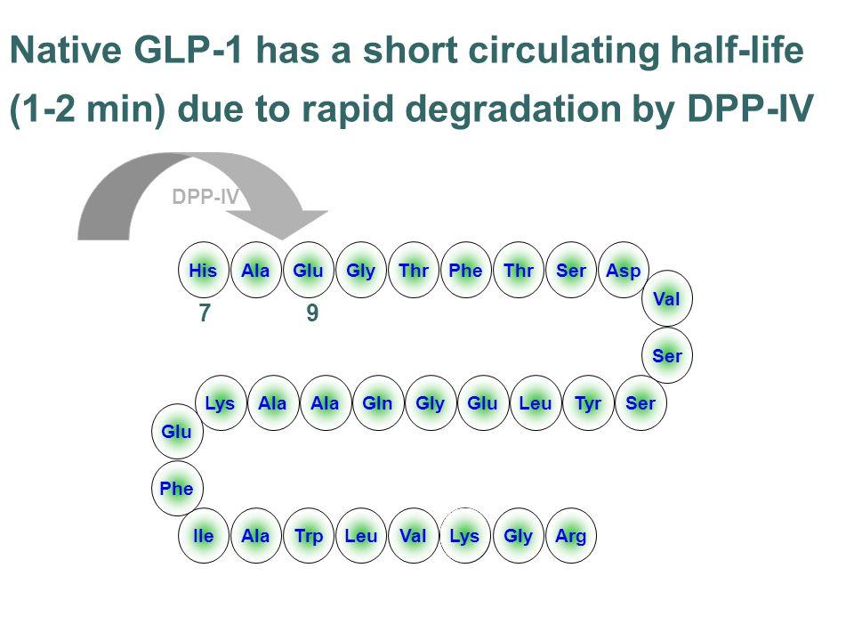 HisAlaGluGlyThrPheThrSerAsp LysAla GlnGlyGluLeuTyrSer IleAlaTrpLeuVal Lys GlyArg Val Ser Glu Phe Native GLP-1 has a short circulating half-life (1-2 m