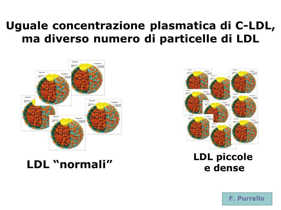 F. Purrello Uguale concentrazione plasmatica di C-LDL, ma diverso numero di particelle di LDL LDL normali LDL piccole e dense